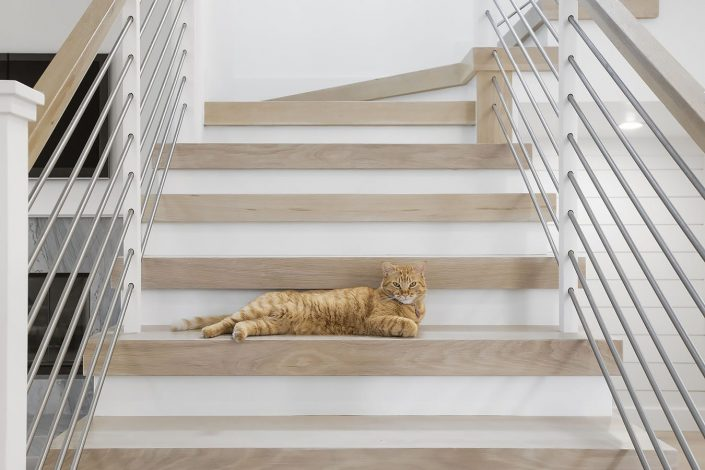SHI - Home Remodel Cat on Stairs